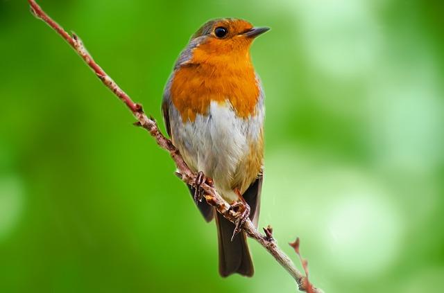 bird-218200_640